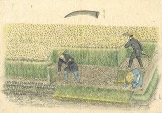 Agricultural work at that time: painting by Shinzaburo Miyazaki